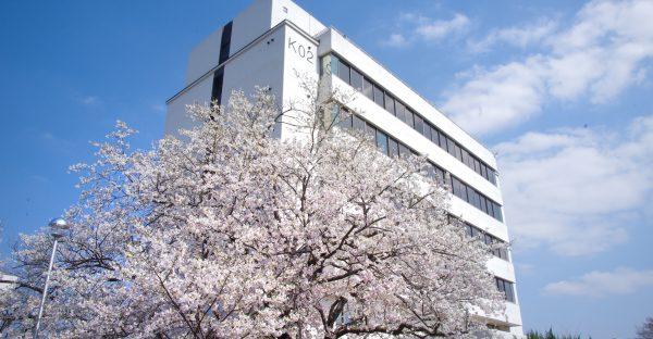 KEK2号館の桜(2021/3/24)撮影:荒岡修